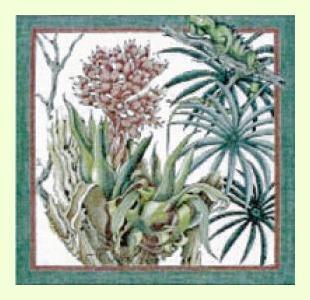 Rainforest-Guana design